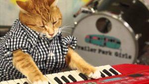Kat wil piano leren spelen